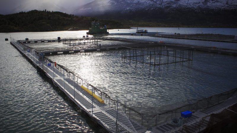 Consejo del Salmón propone modelo de desarrollo sostenible para la salmonicultura en la macrozona sur